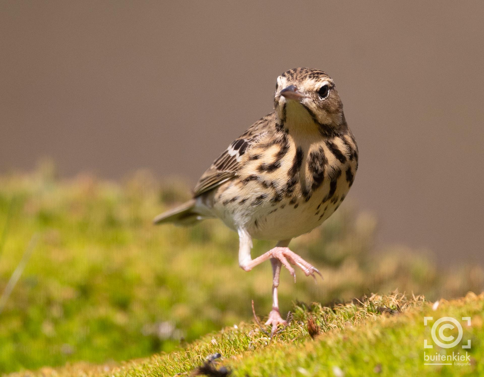Vogelhutten in Nederland