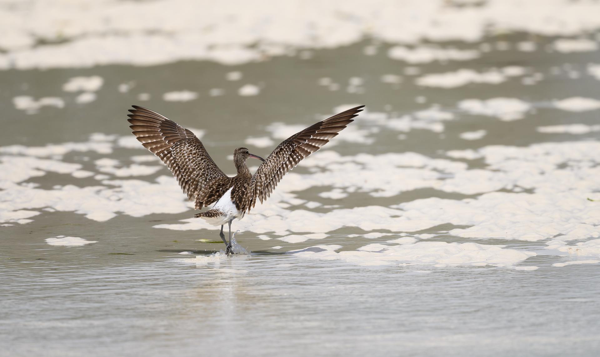 Tanzania, Wulp in zee