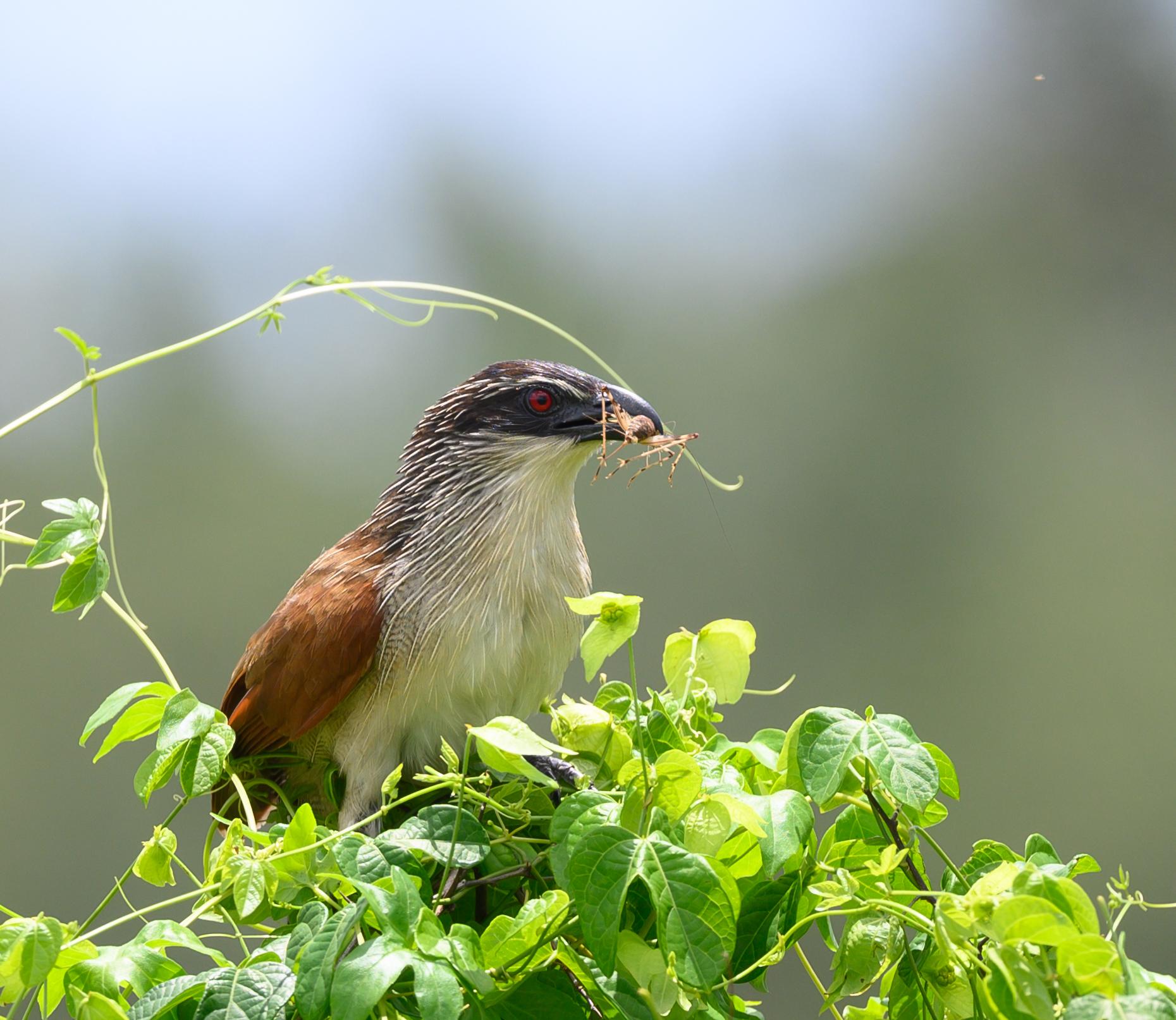 Vogels in alle soorten.